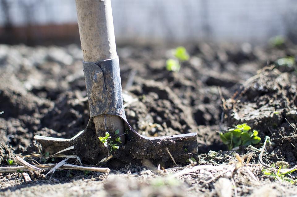 Shovel in garden bed